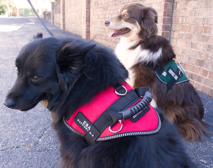 Service Dogs For Seizures In Florida