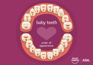 https://www.mouthhealthy.org/en/az-topics/b/baby-teeth